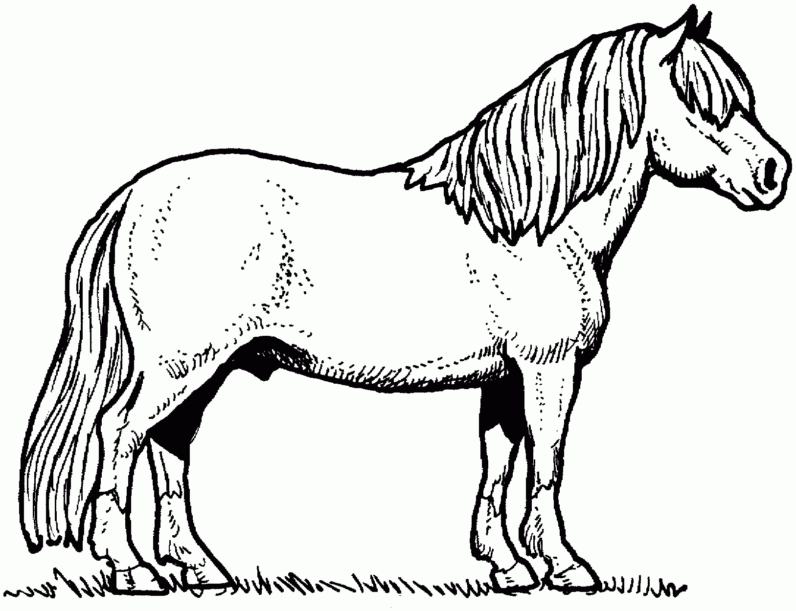 Horse Head Coloring Pages Printable