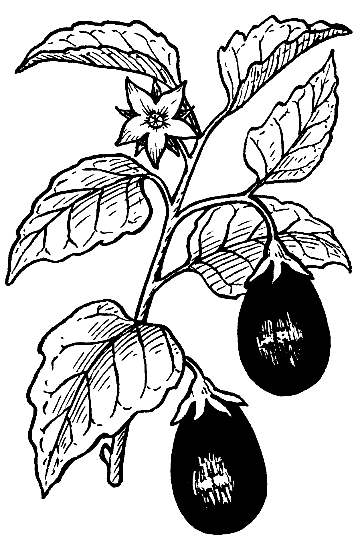 Line Drawing Vegetables : Line drawings of vegetables clipart best