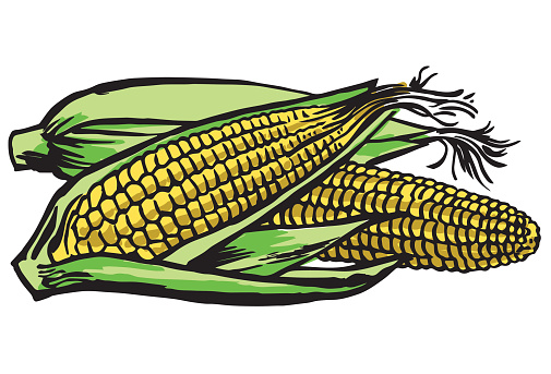 Corn On The Cob Clip Art, Vector Images & Illustrations
