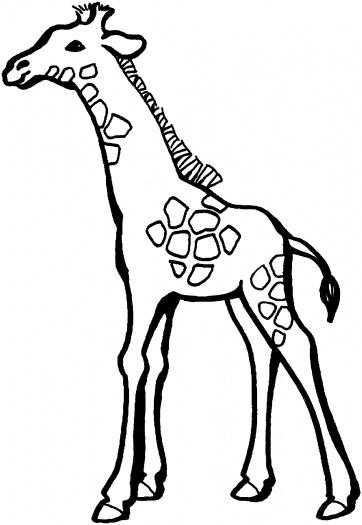 Baby Giraffe Drawing - ClipArt Best