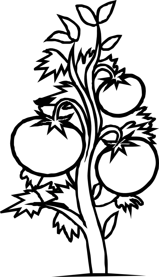Tree Black And White Colouring Pages Clipart Best Black And White Tree Coloring Page