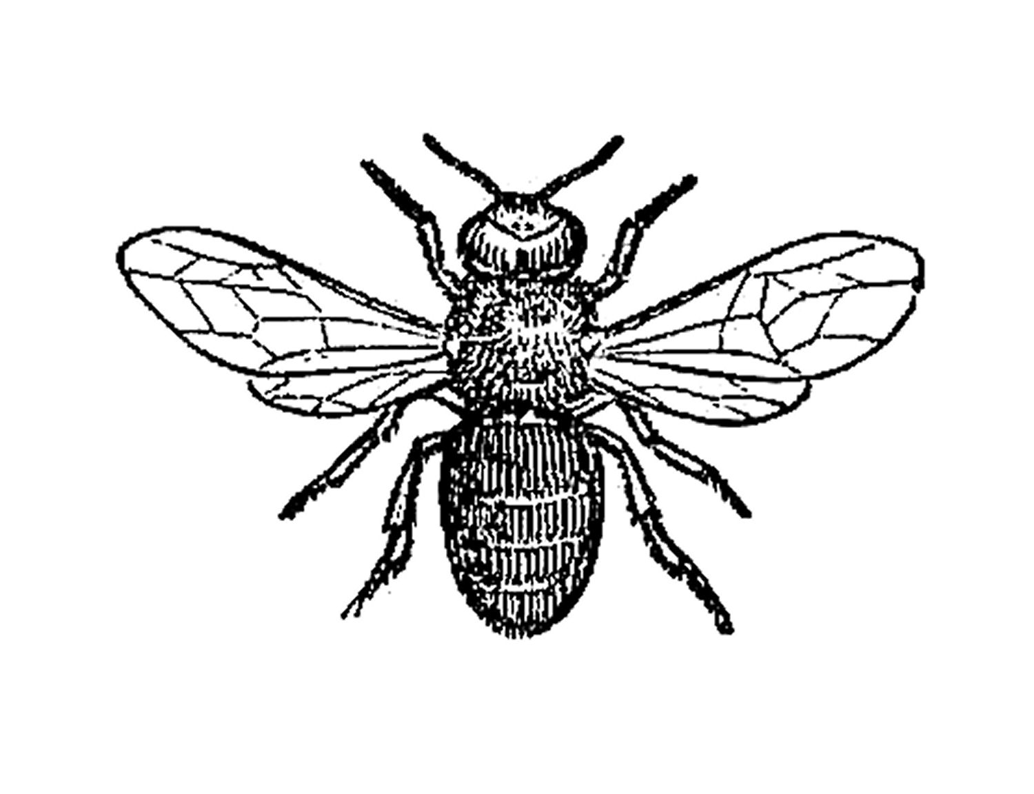 Free Bee Clipart Black And White Black And White Clipart