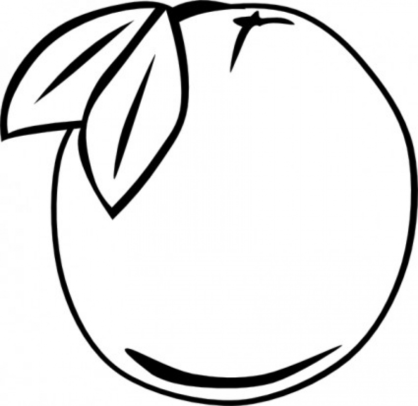 Line Art Fruits : Line drawing of fruit clipart best