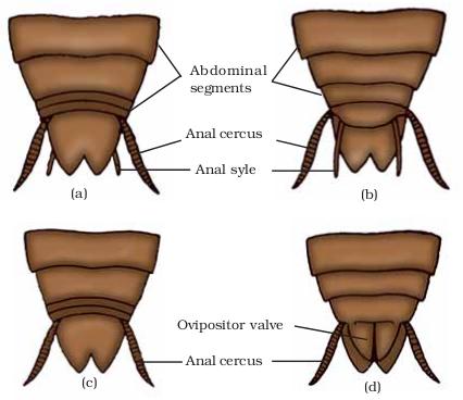 Abdomen       Diagram       Male     ClipArt Best
