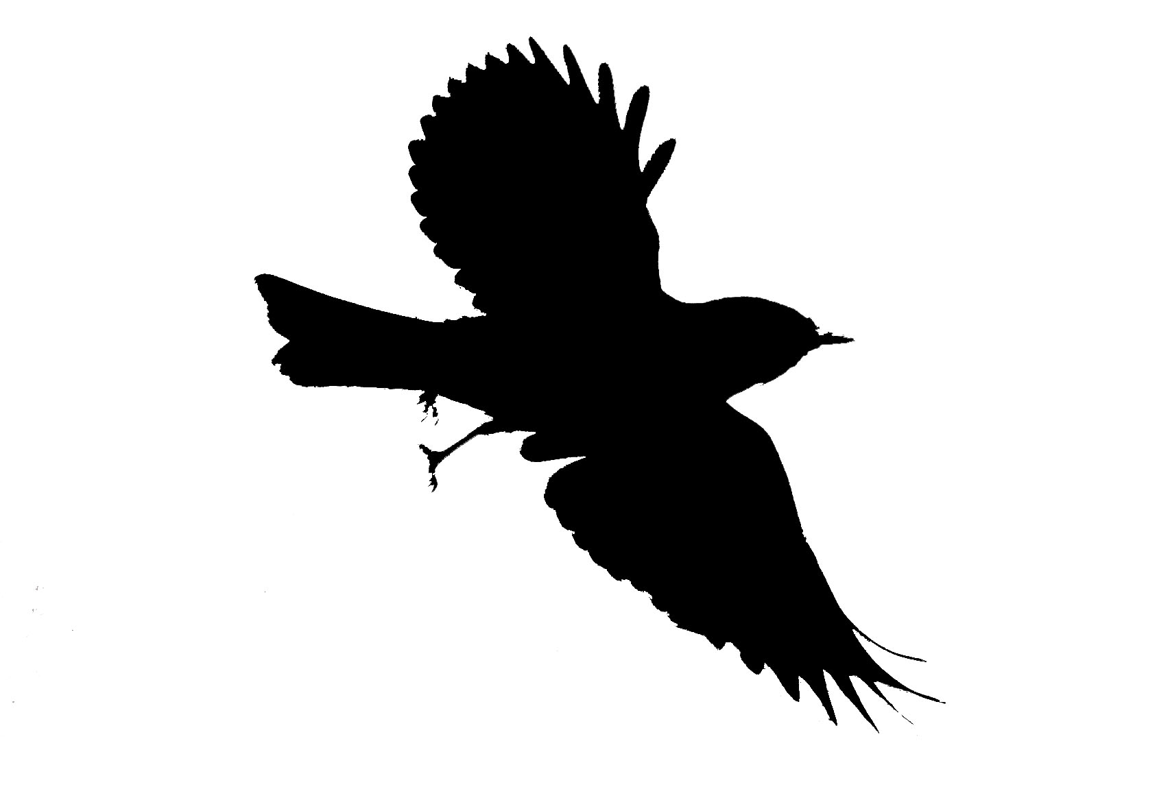 Silhouette Birds Flying - ClipArt Best
