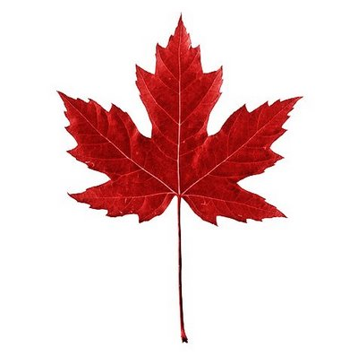 red maple leaf wallpaper size after the rain clipart