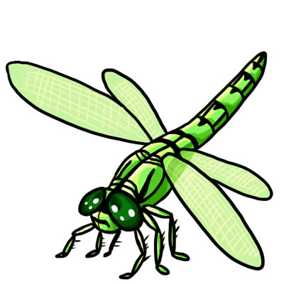 Dragonflies Drawings - ClipArt Best