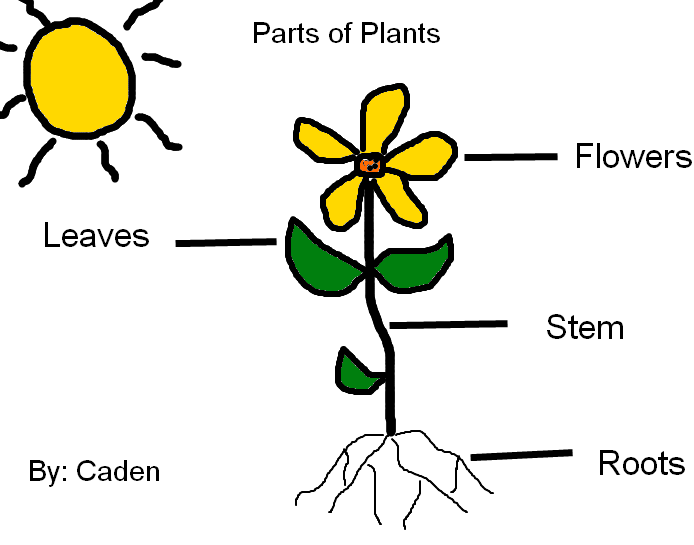 Diagram Of A Plant Kids