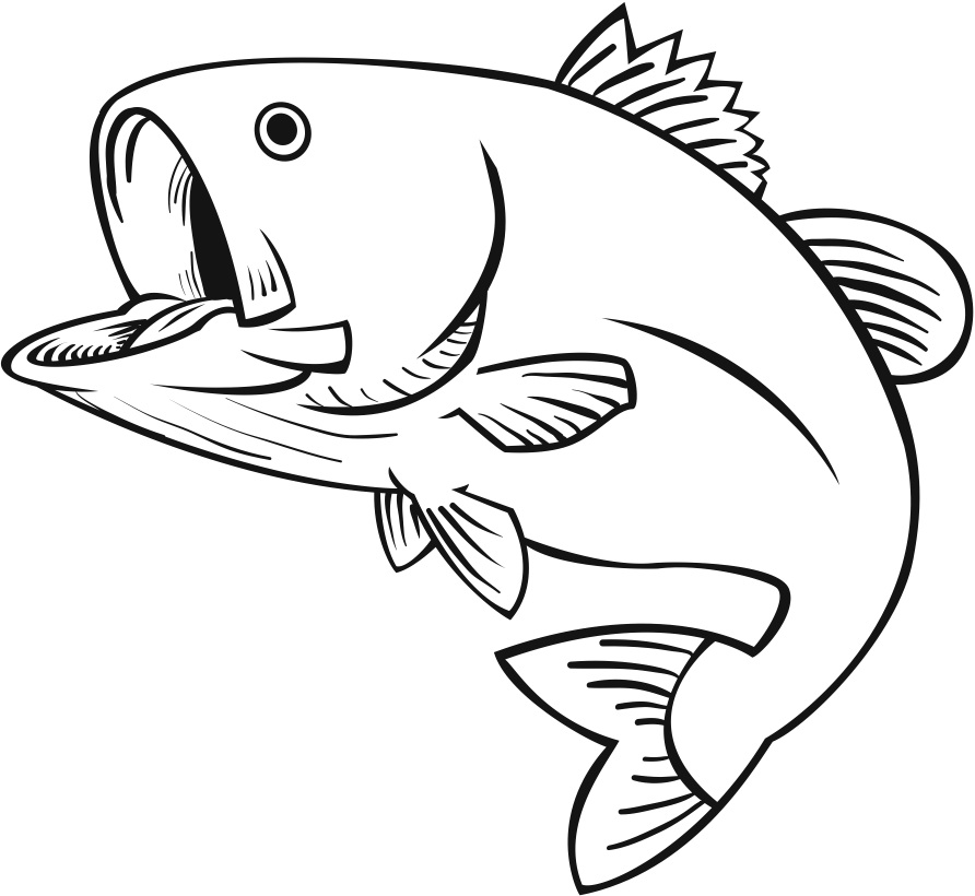 Line Drawing Of Fish : Fish for drawing clipart best