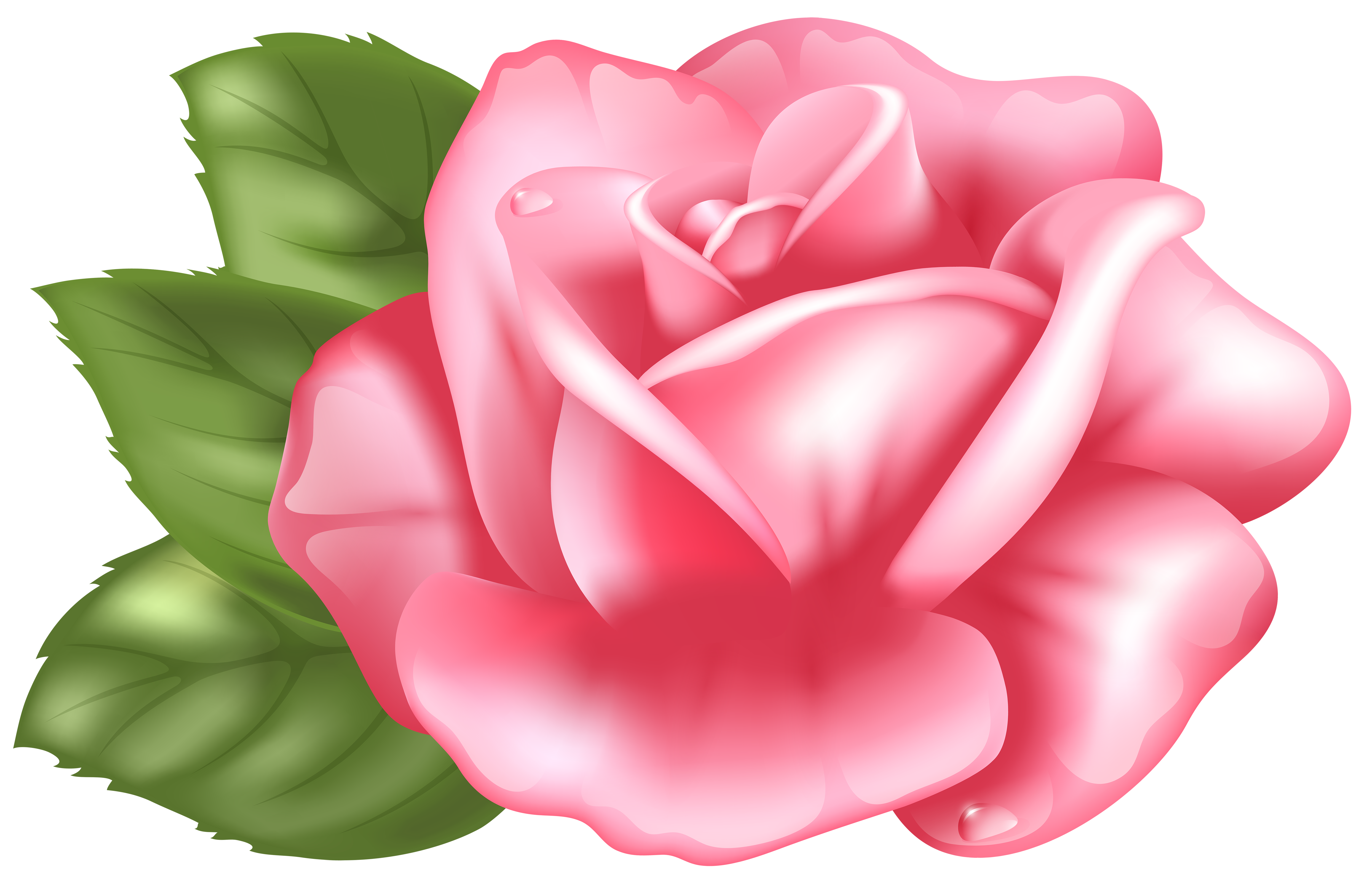 Tea Rose Clipart Black And White: Pink Rose Clipart