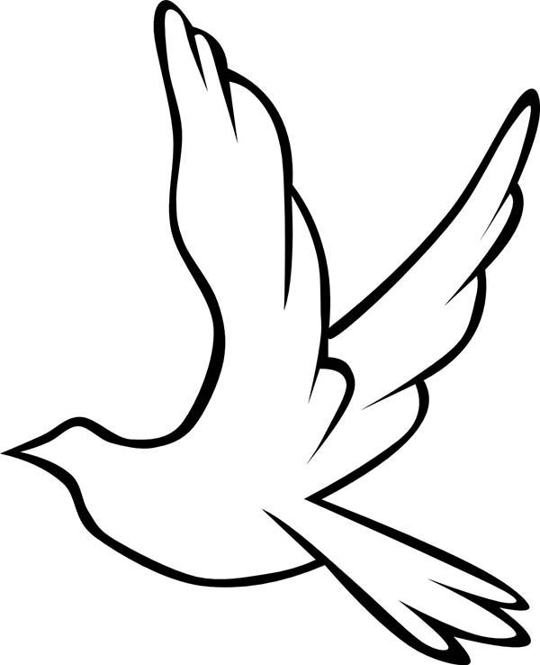 Dove Bird Drawing