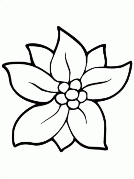 Цветы фото раскраски