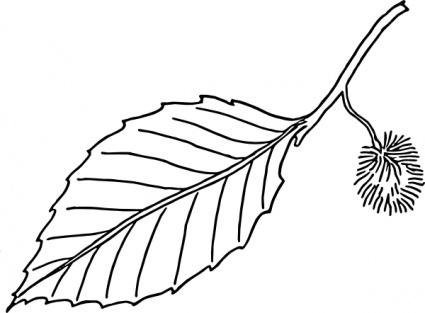 Leaf Outline Png Oak Leaf Photo Leaf Outline