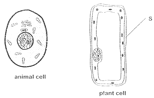 Blank Animal Cell Diagram - ClipArt Best