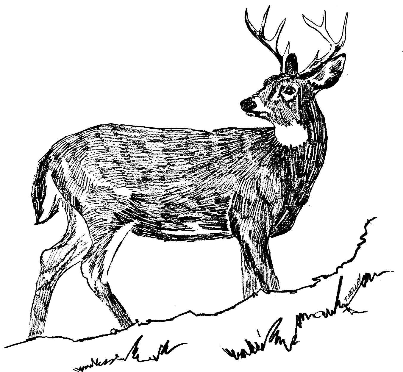 Line Drawing In C : Deer drawing clipart best