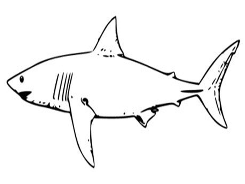 This is a picture of Persnickety Printable Shark Template