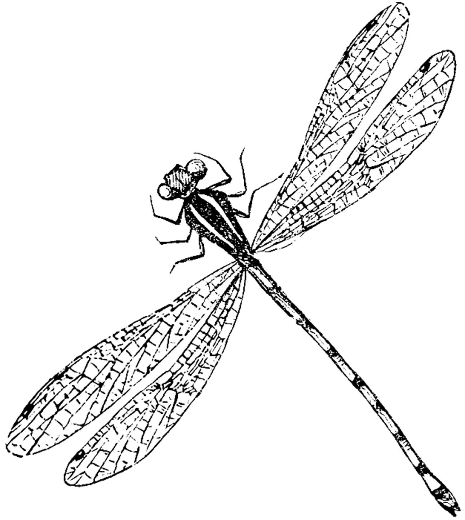 Dragonfly Tattoo Line Drawing : Dragonfly line drawing clipart best