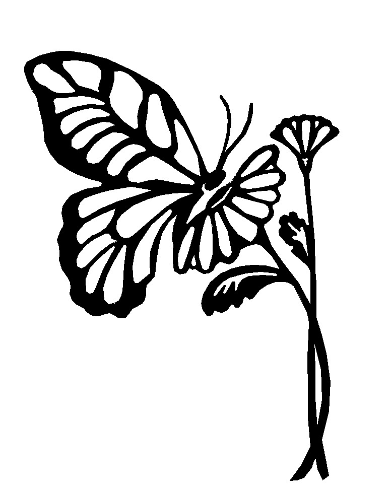 Butterfly Outline Images Stock Photos amp Vectors