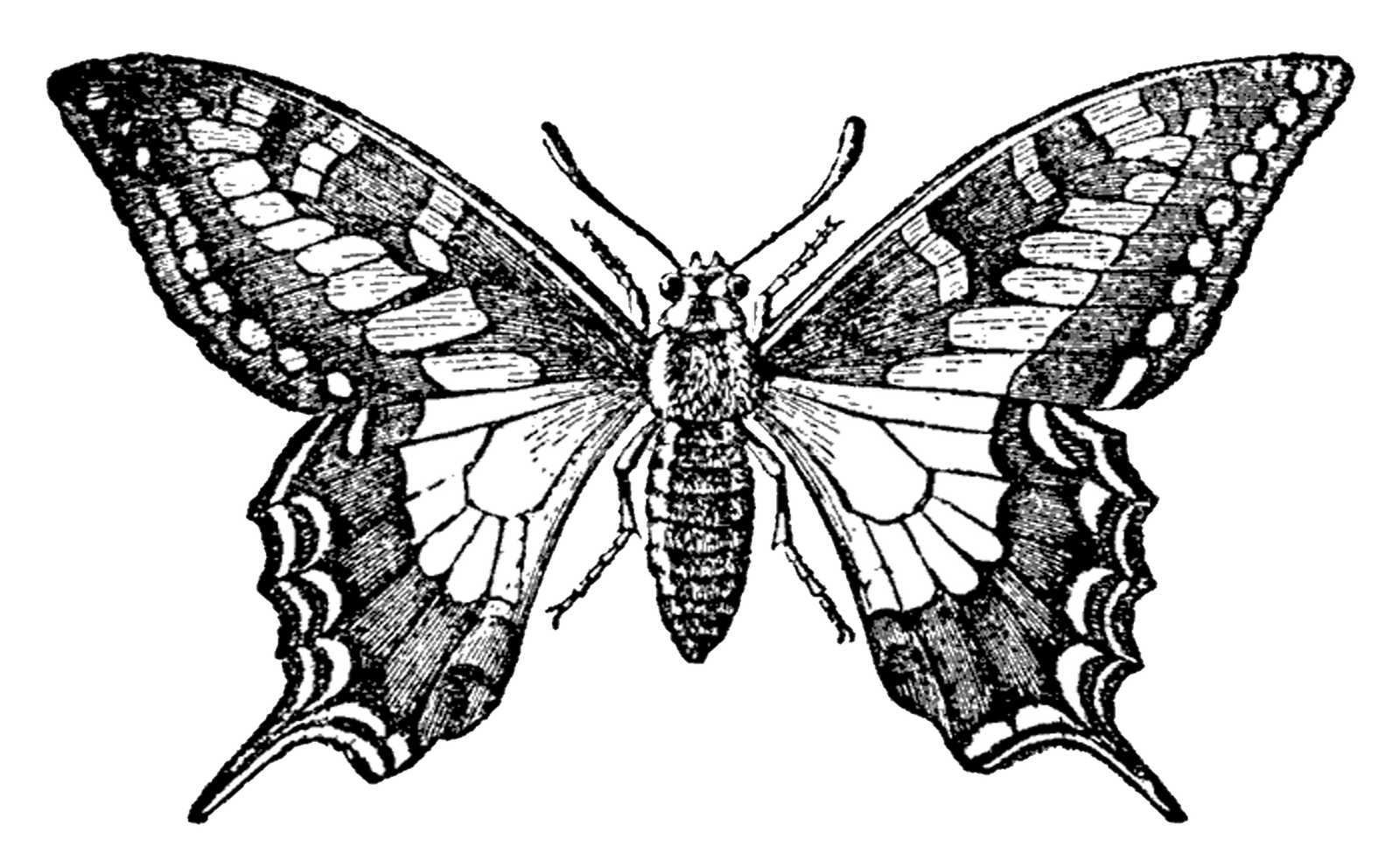 Black And White Vintage Background Png Black and white butterflyVintage Butterfly Black And White