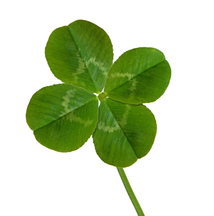Four Leaf Clover Pic Clipart Best