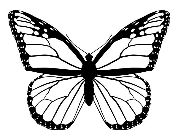 Line Art Of Butterfly : Butterfly line drawing clipart best