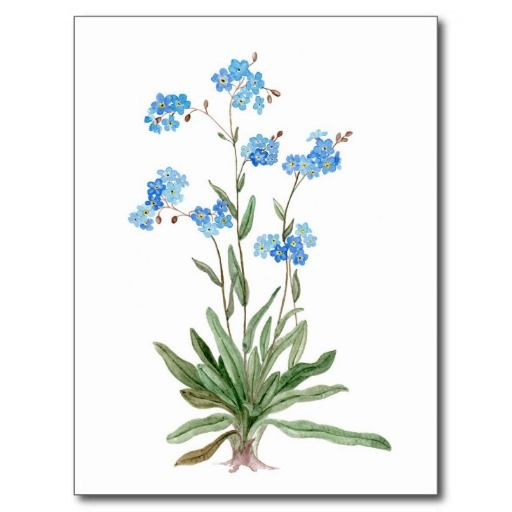 clip art forget me not flower - photo #39