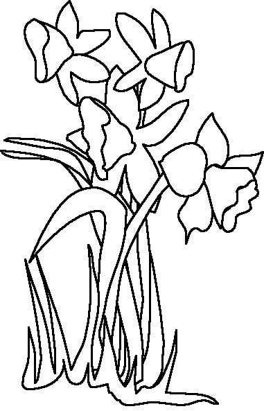 Line Drawing Daffodil : Daffodil line drawing clipart best