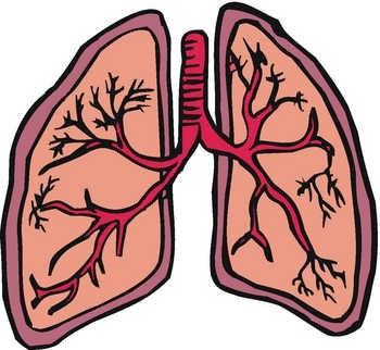 Respiratory System Pictures For Kids - ClipArt Best