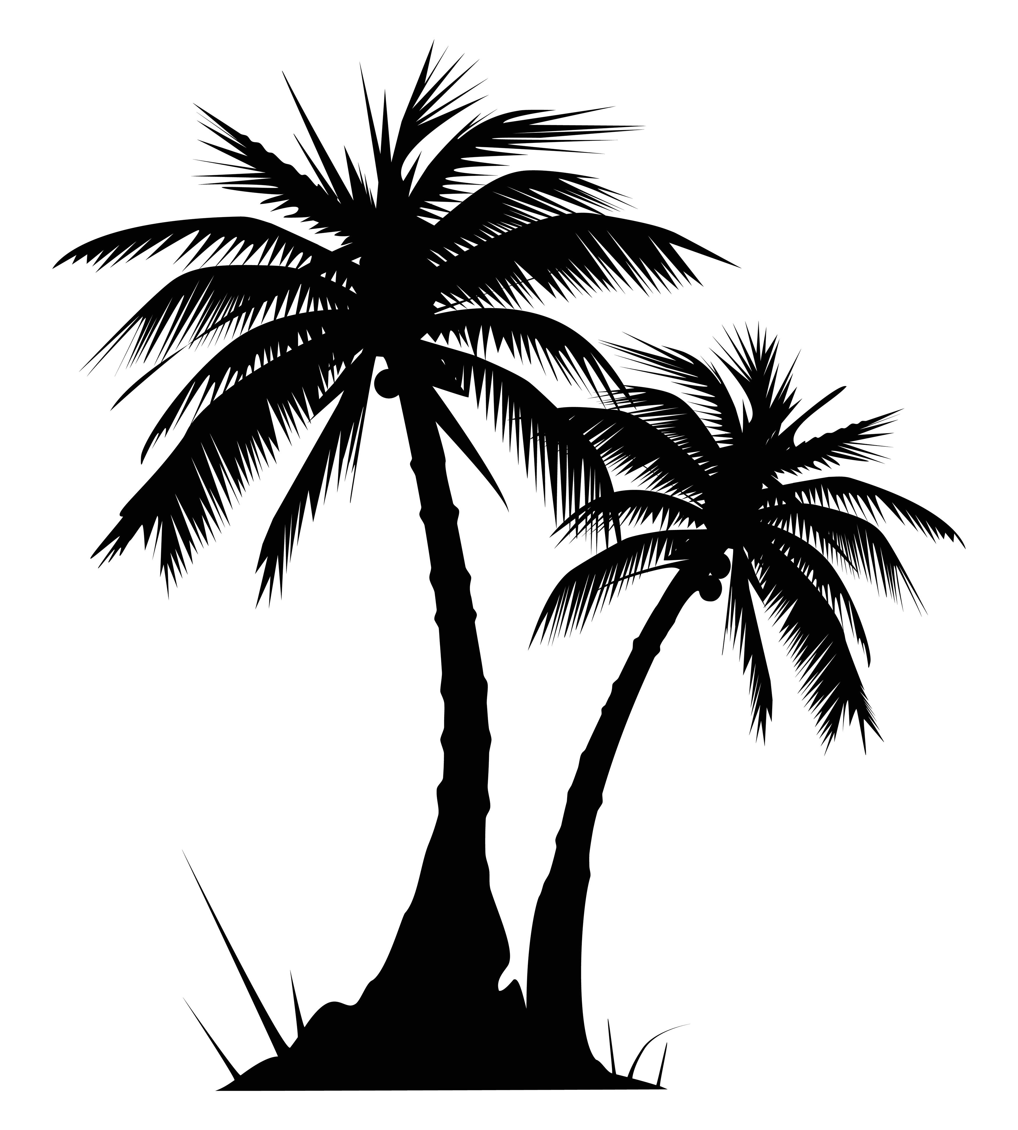 palm tree white - photo #3