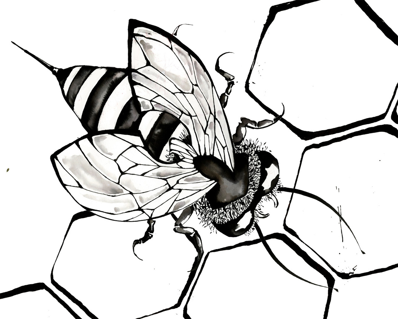 Xfig Line Drawing : Bee line drawing clipart best