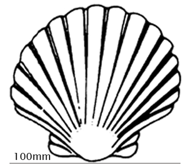 Seashell Outline - ClipArt Best
