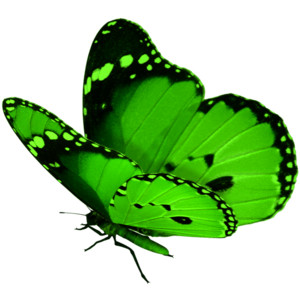 Green Butterfly - ClipArt Best