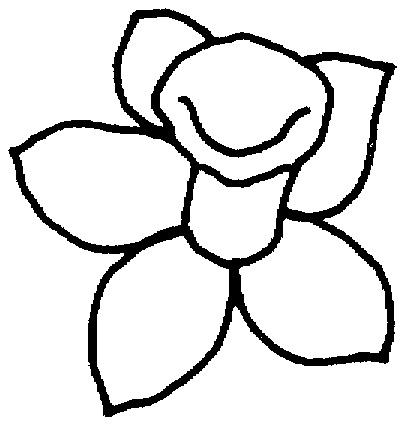 Daffodil outline