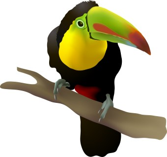 Toucan Clipart - ClipArt Best