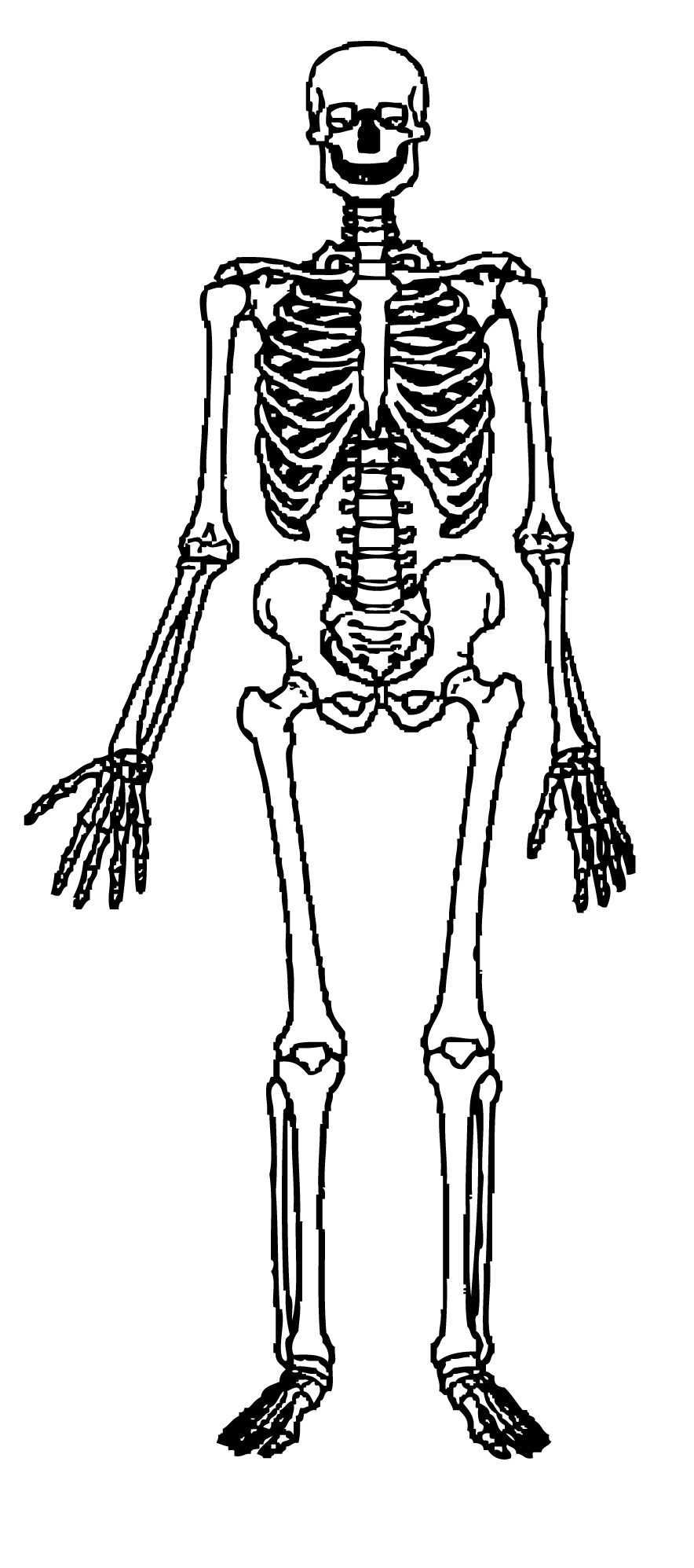 Human Skeleton Clipart Free Cliparts Clipart Best Human Skeleton Coloring Pages