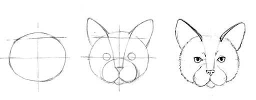Line Drawing Of A Cat Face : How to draw a cat face clipart best
