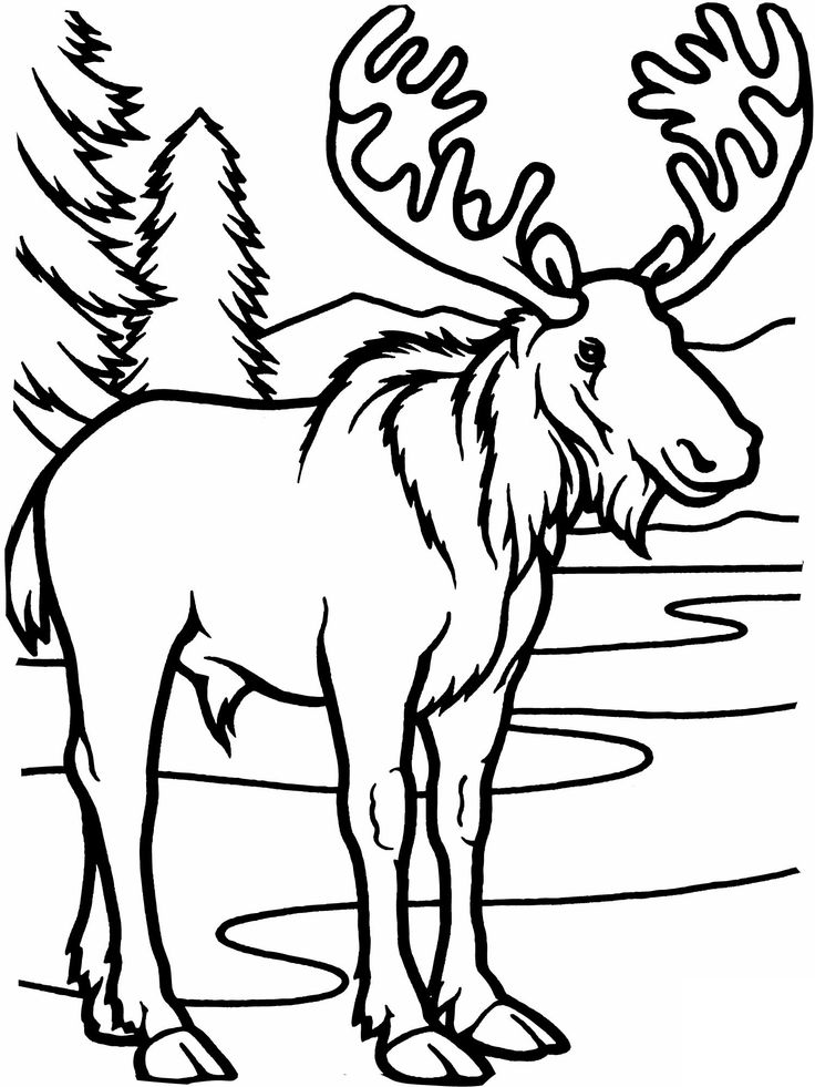 moose coloring pages for adults - Clip Art Library | 981x736