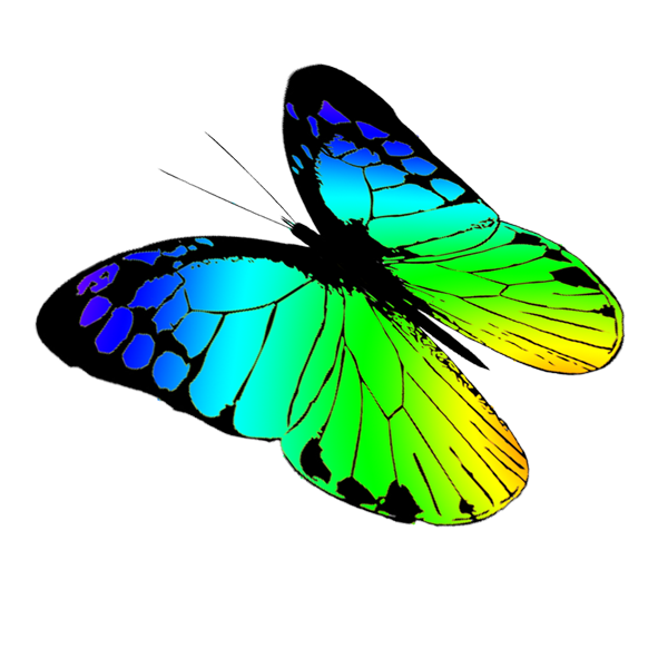 Flying Butterfly Drawings - ClipArt Best