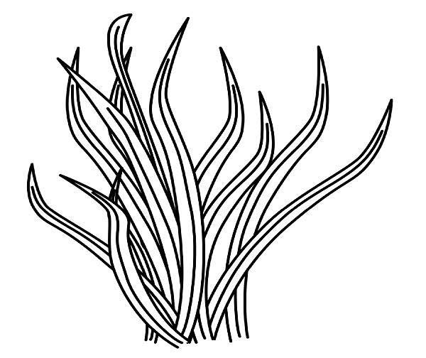 Line Drawing Grass : Grass line drawing clipart best