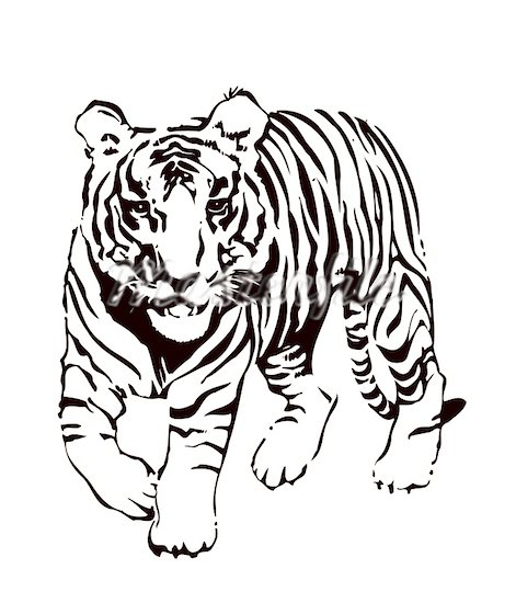 Drawing Tiger In Black And White - ClipArt Best