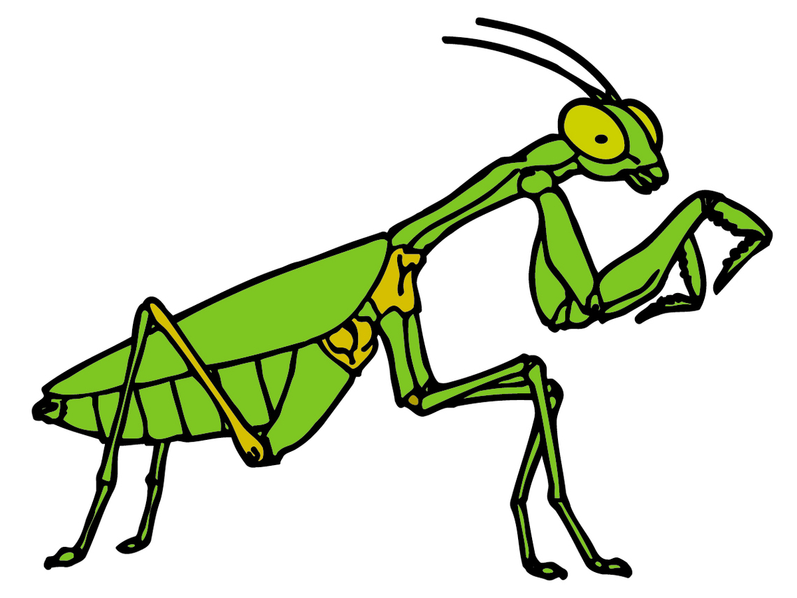 Cricket Insect Clipart Clipart - Free to use Clip Art Resource