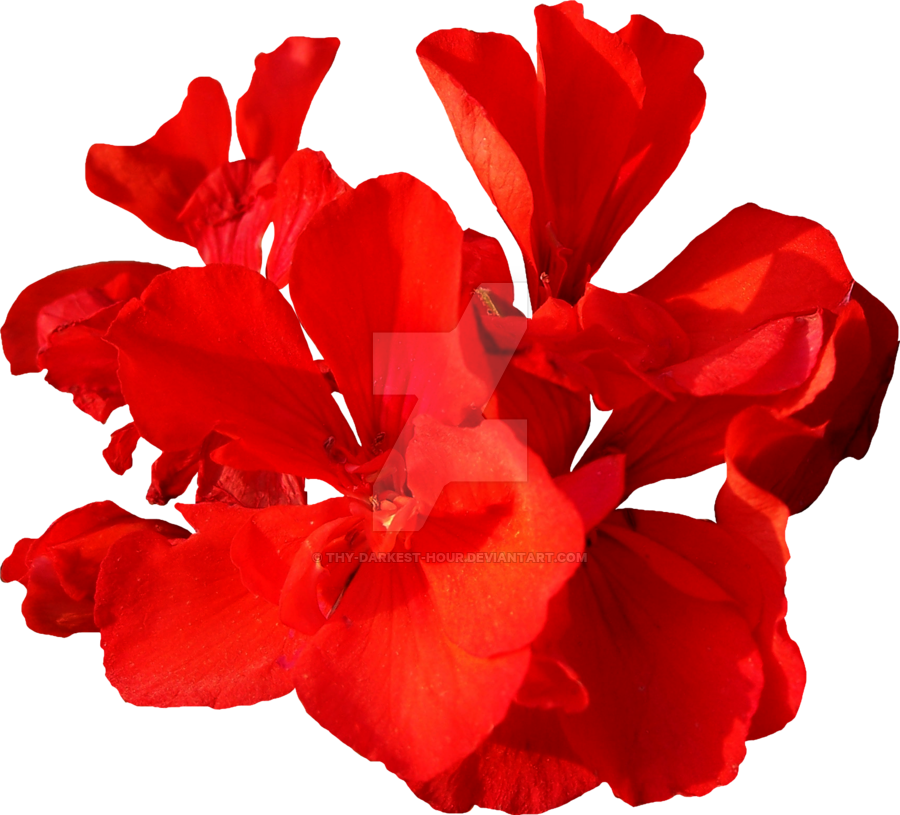 Red Flower-png