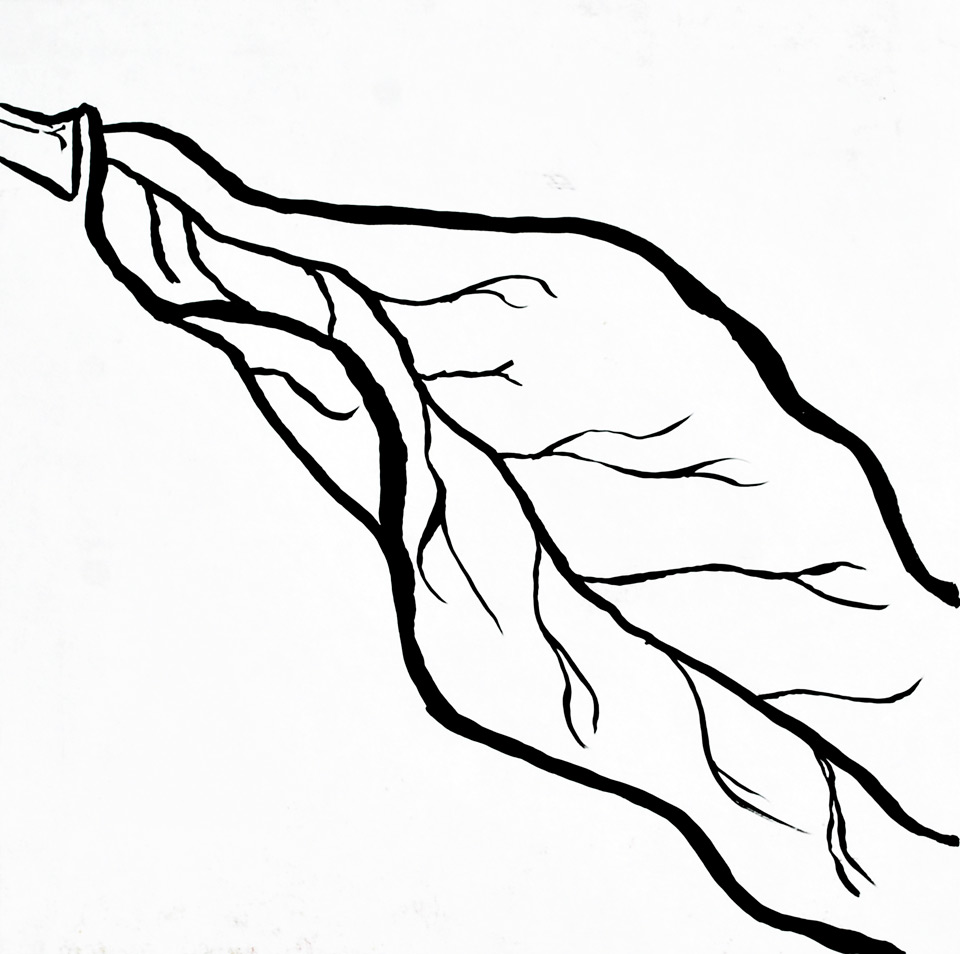 Contour Line Drawing Leaves : Leaf line drawing clipart best