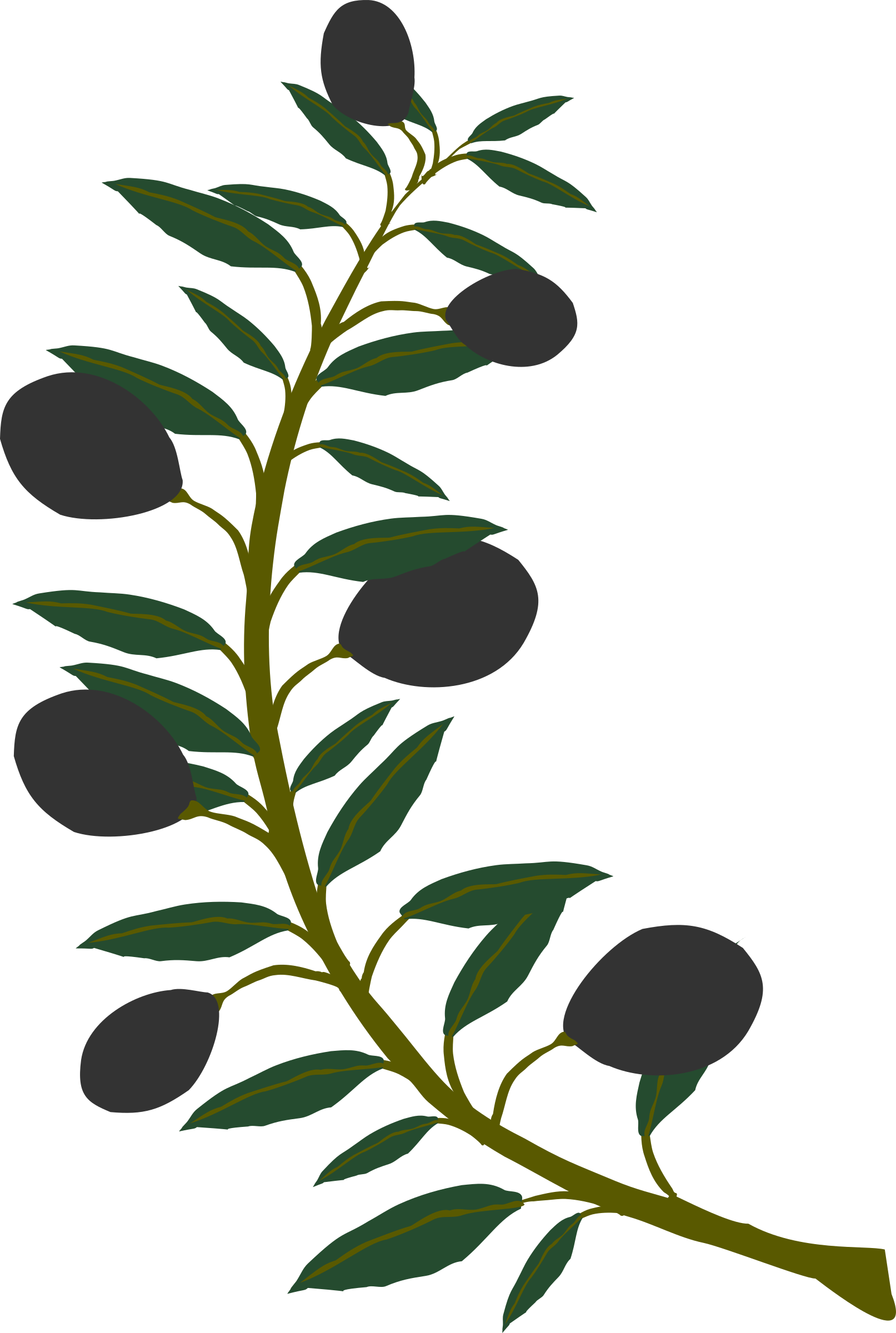 olive branch photo clipart best olive branch clipart vector olive branch clip art round