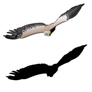 Vulture Vector - ClipArt Best
