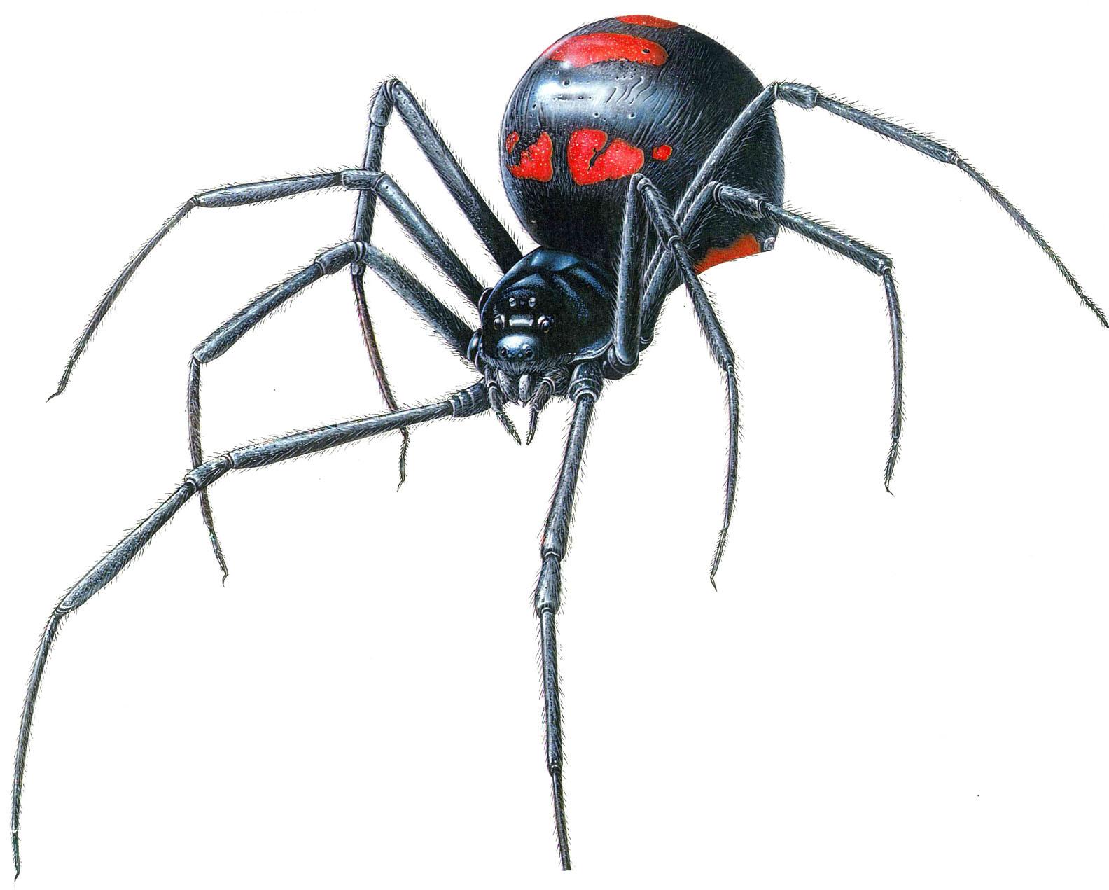 Black spider drawing