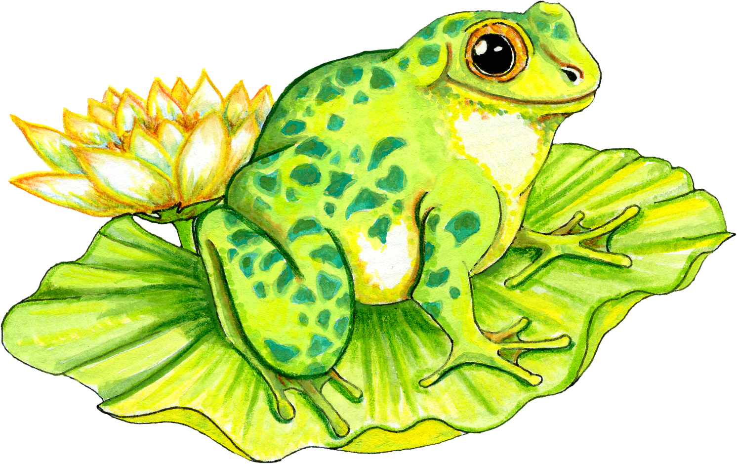Cartoon Frog On Lily Pad - ClipArt Best - ClipArt Best