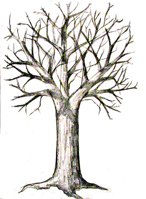 Tree drawing with roots clipart best for Best tree drawing