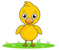 Mallard duck illustrations and clipart 848  Can Stock Photo