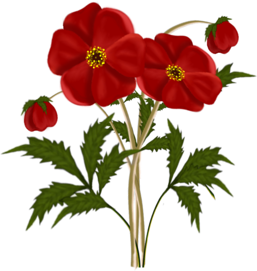 Red Flower png ClipArt Best